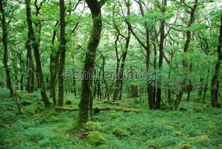 dartmoor, i - 784361