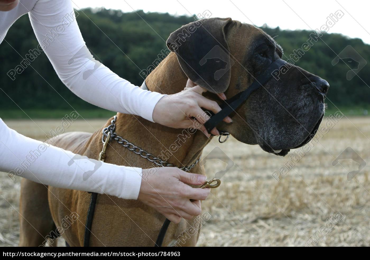 dog, training, accessories - 784963