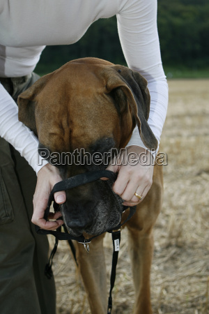 dog, training, accessories - 785003