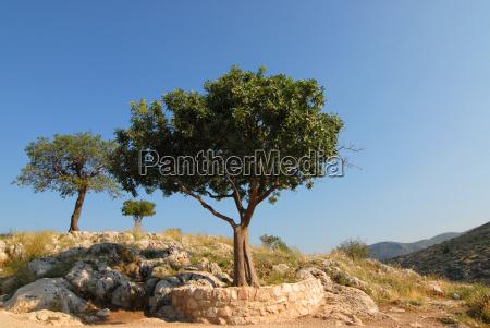 tree, group - 786947