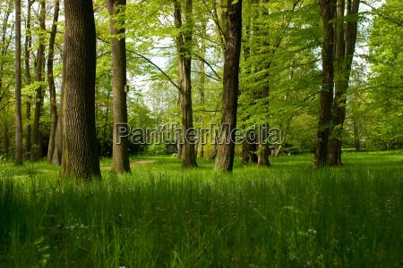 summer, forest - 788965
