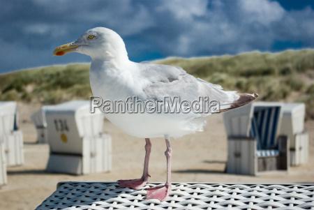 gull, on, beach, chair - 789201