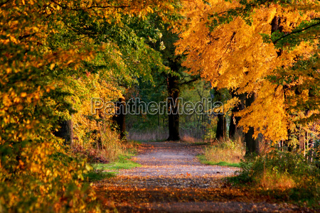 road, in, the, fall - 789373