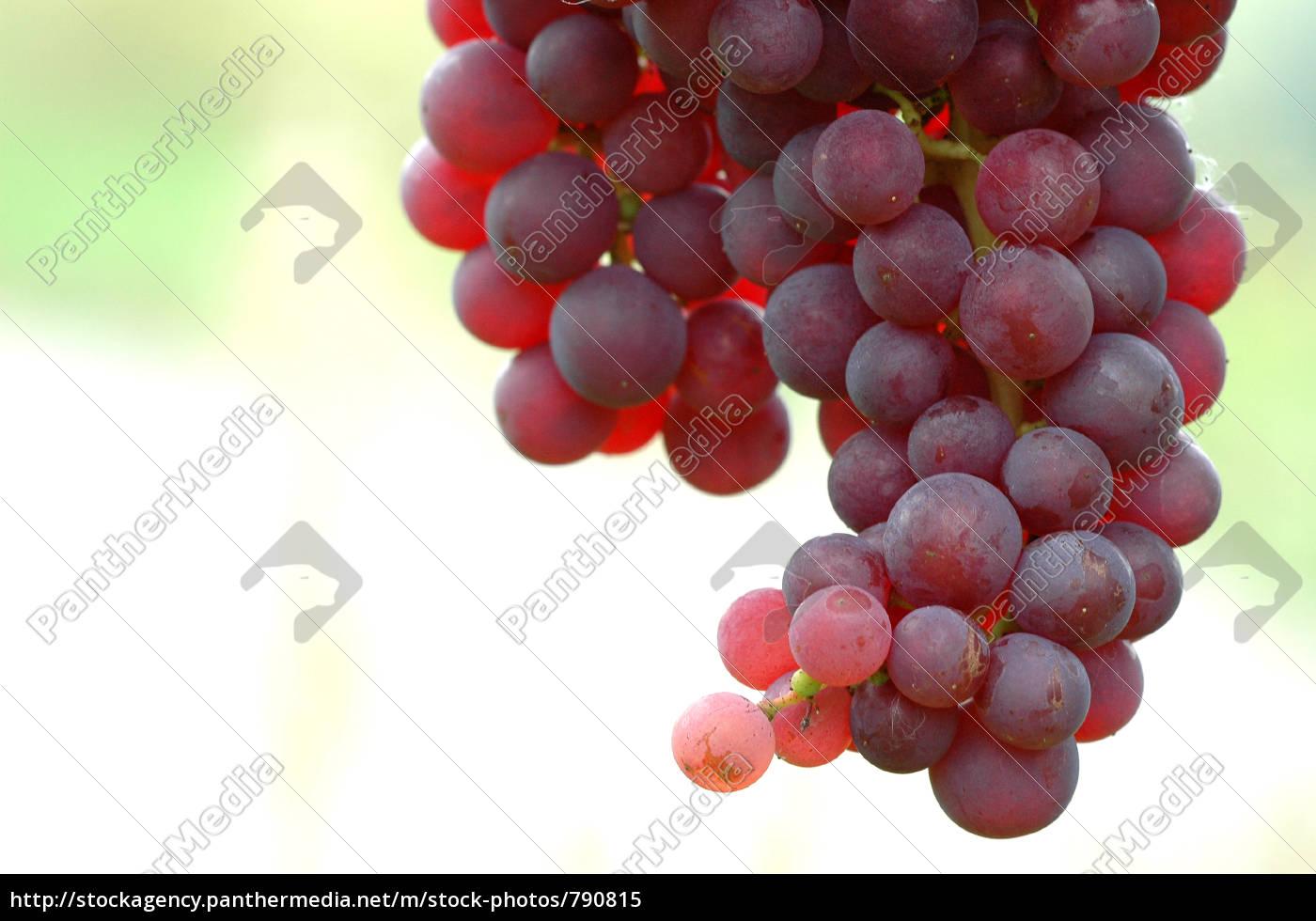 grapes, 7 - 790815