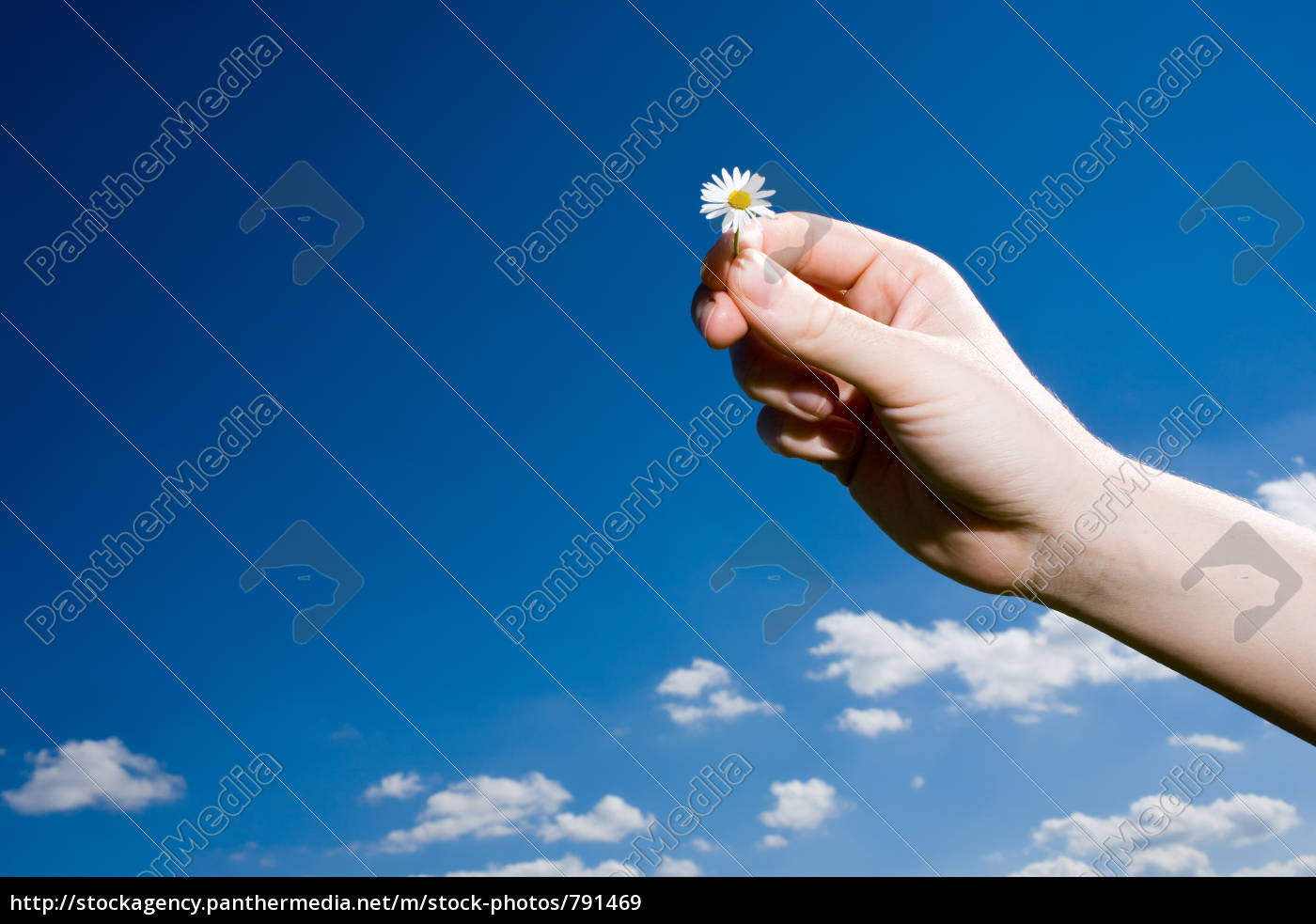 daisies, in, front, of, sky - 791469