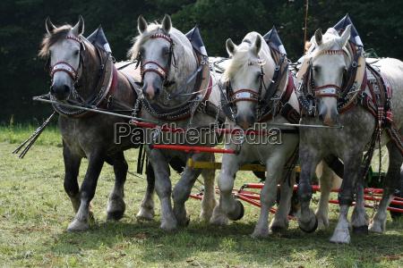 lots, of, horsepower - 793575