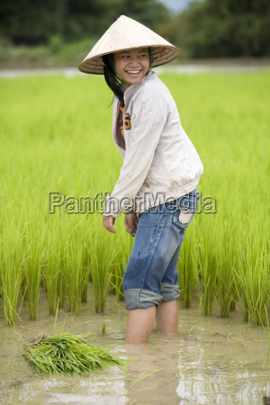 work, on, rice, field, laos - 796901
