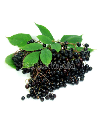 elderberries - 797211