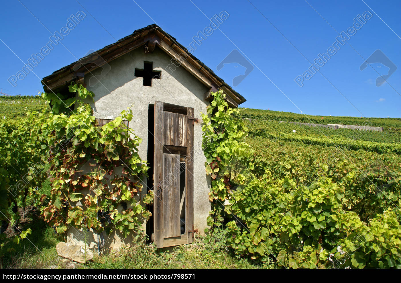 in, the, vineyard - 798571