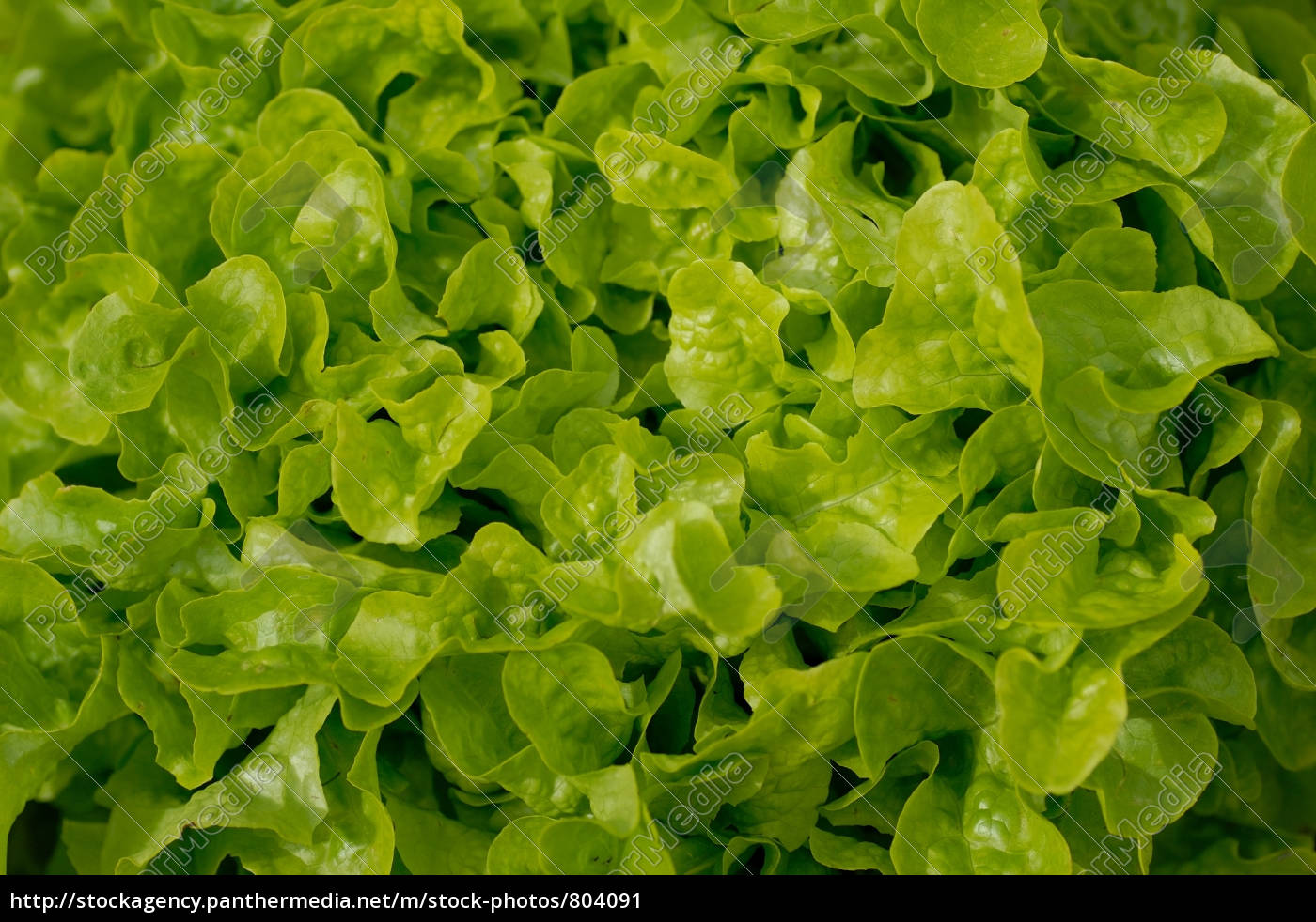 green, salad, from, above - 804091