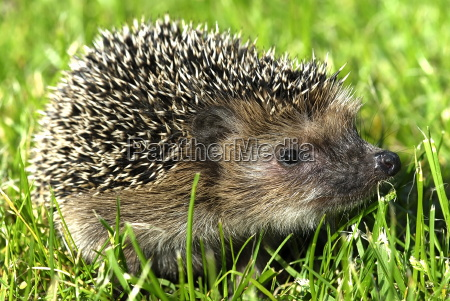prickly - 811567