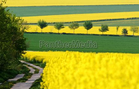 way through fields