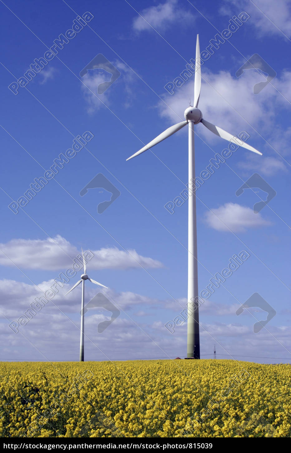canola, field, with, wind, turbine - 815039
