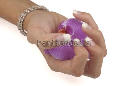 manicure - 815999