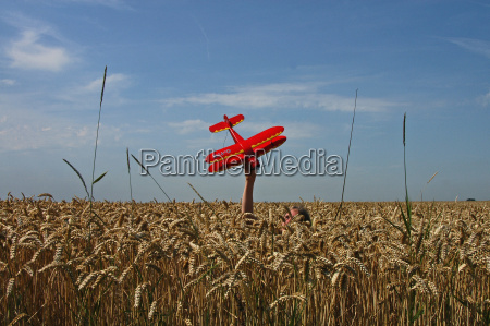model, aircraft, in, the, cornfield - 820277