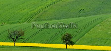 yellow strip