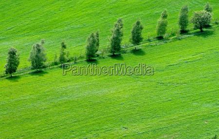 way through green land