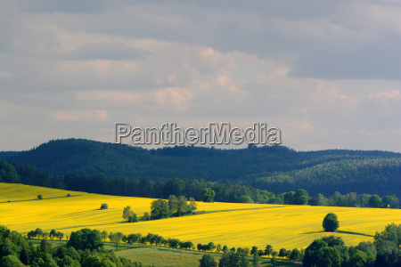 light on the fields