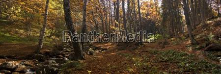 autumn, panorama - 870609