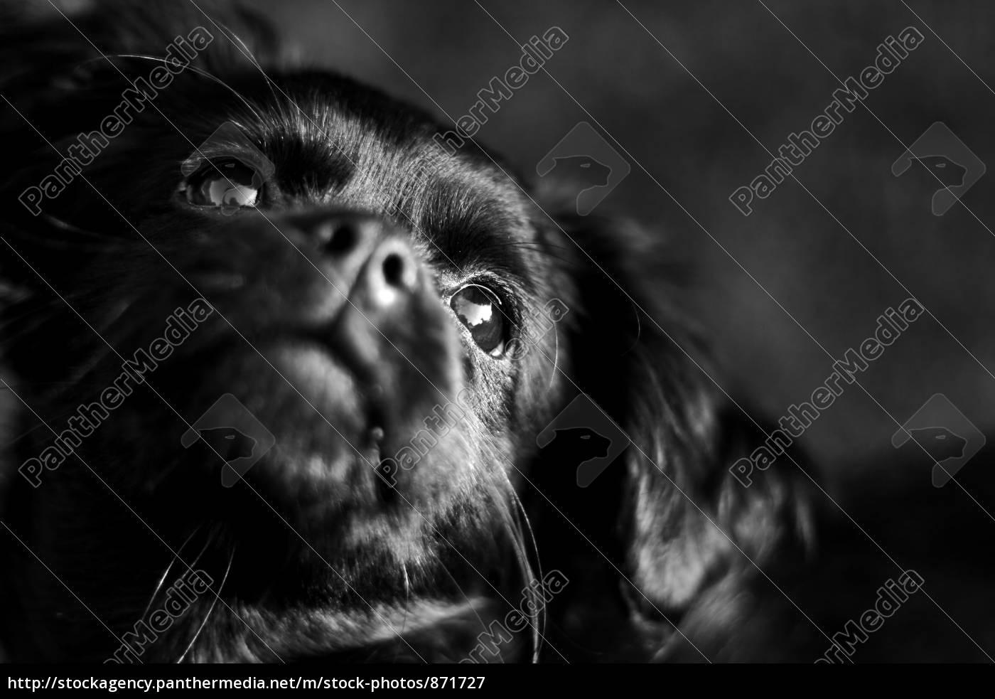 dog, dreams - 871727