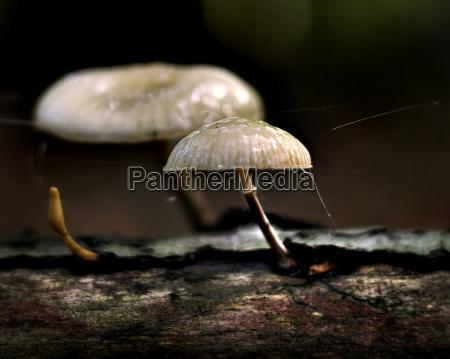 mushrooms - 871507