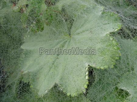 net dew dewdrop moist cobweb spiders