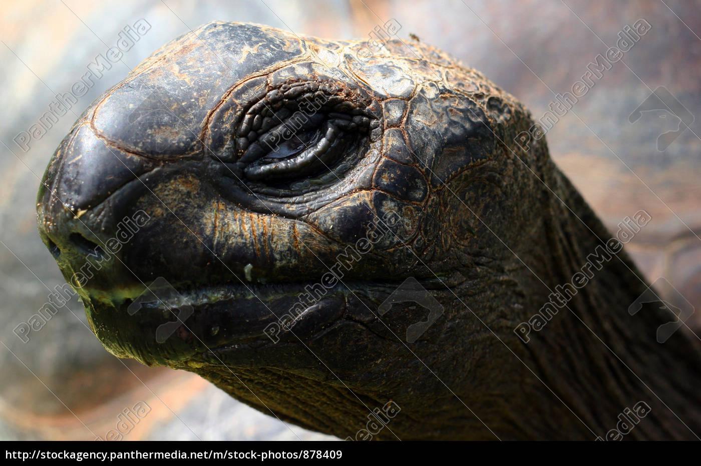 turtle - 878409