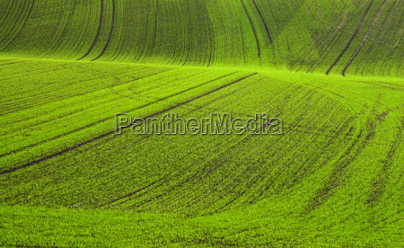 picturesque fields