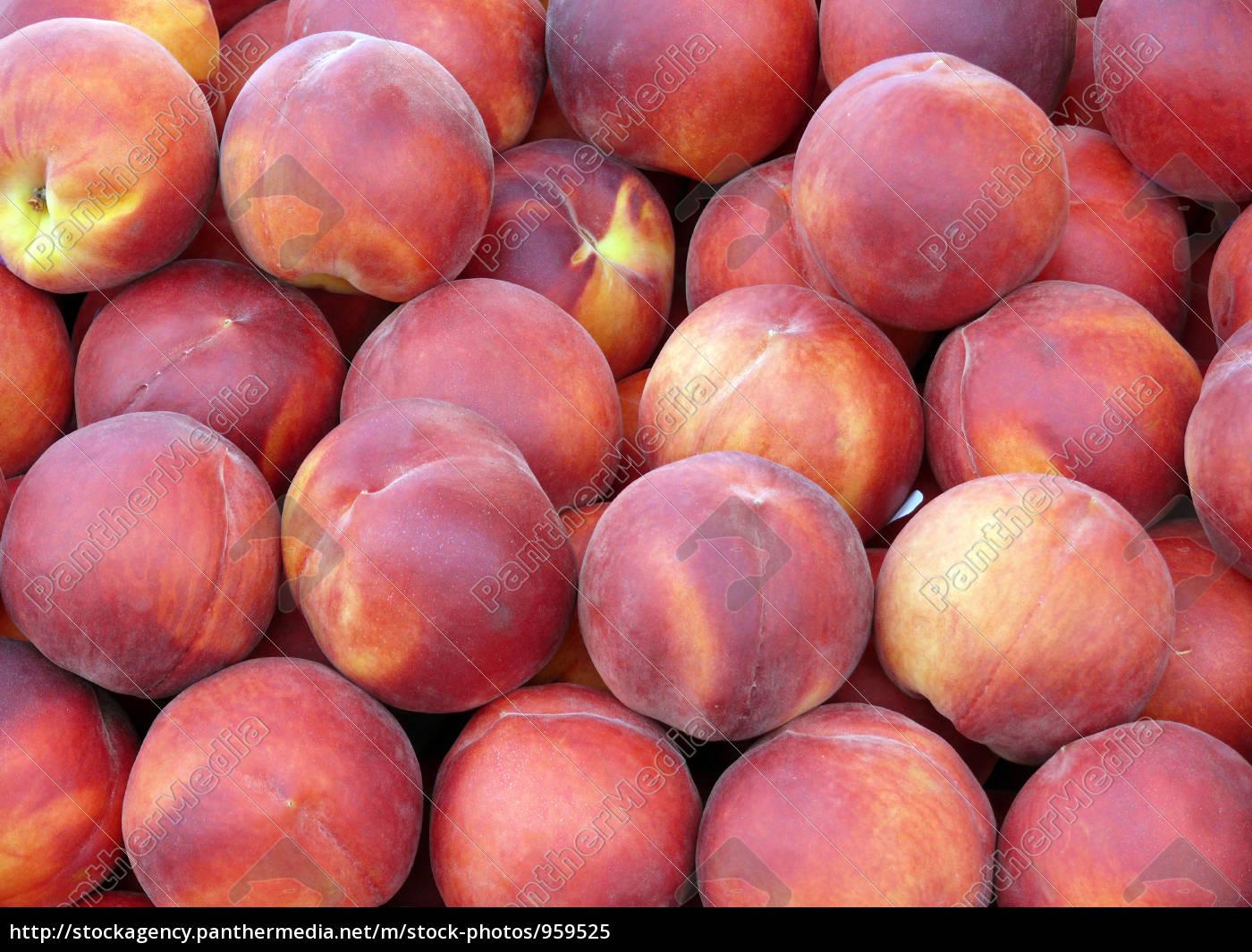 persian, apple - 959525