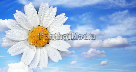 flower with water drops in the