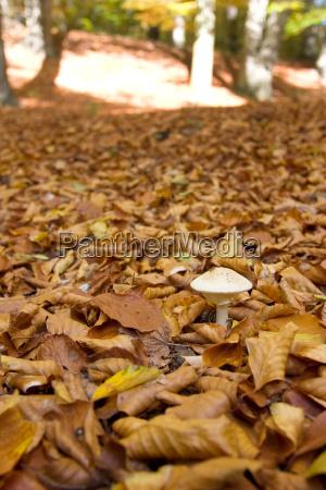 mushroom autumn