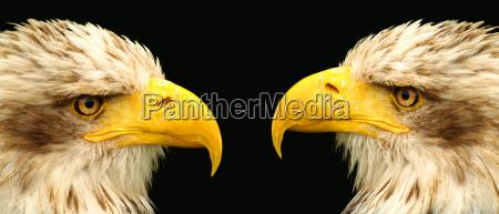 2 raptors observe exactly