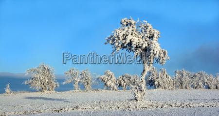 blank european caucasian snow scenery countryside