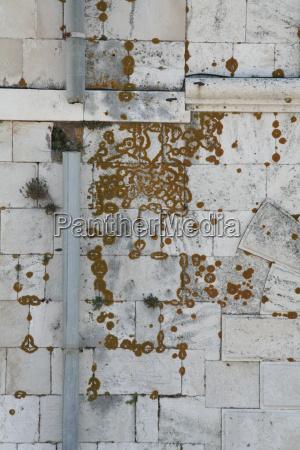 wall plant sponge grey gray stones