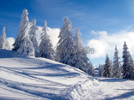 tree trees snowy sense radio silence