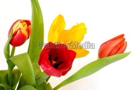 harbingers of spring ii