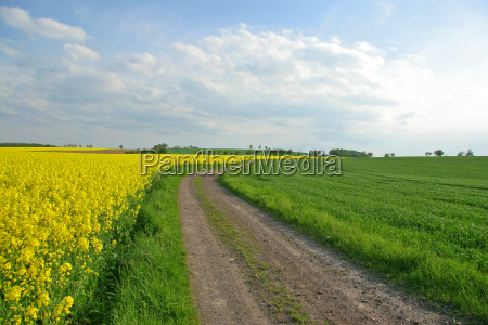between meadows and fields