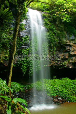 waterfall in dorrigo national park