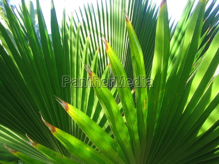 palm subjects