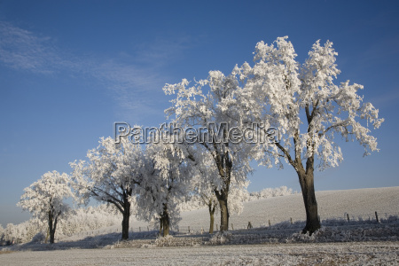 trees covered with hoarfrost