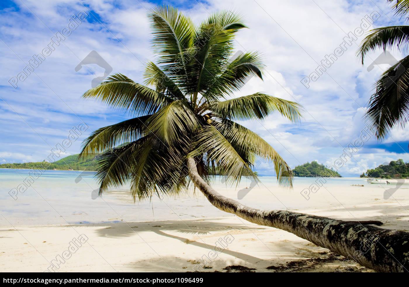 seychelles, -, palm, tree, at, beach - 1096499