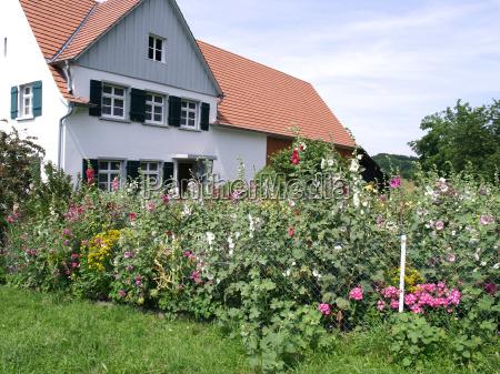 cottage garden in july