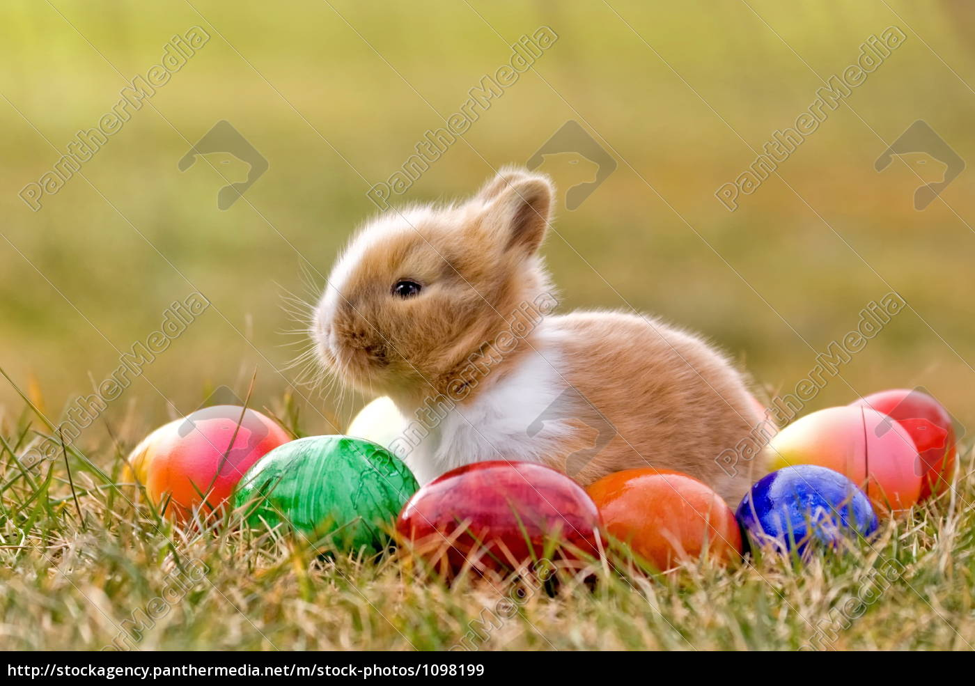 easter, bunny - 1098199