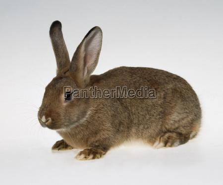 rabbit - 1133945