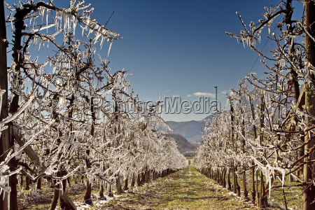 frost irrigation