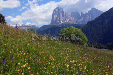 flower meadow in the alps