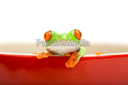 frog in cooking pot isolated on