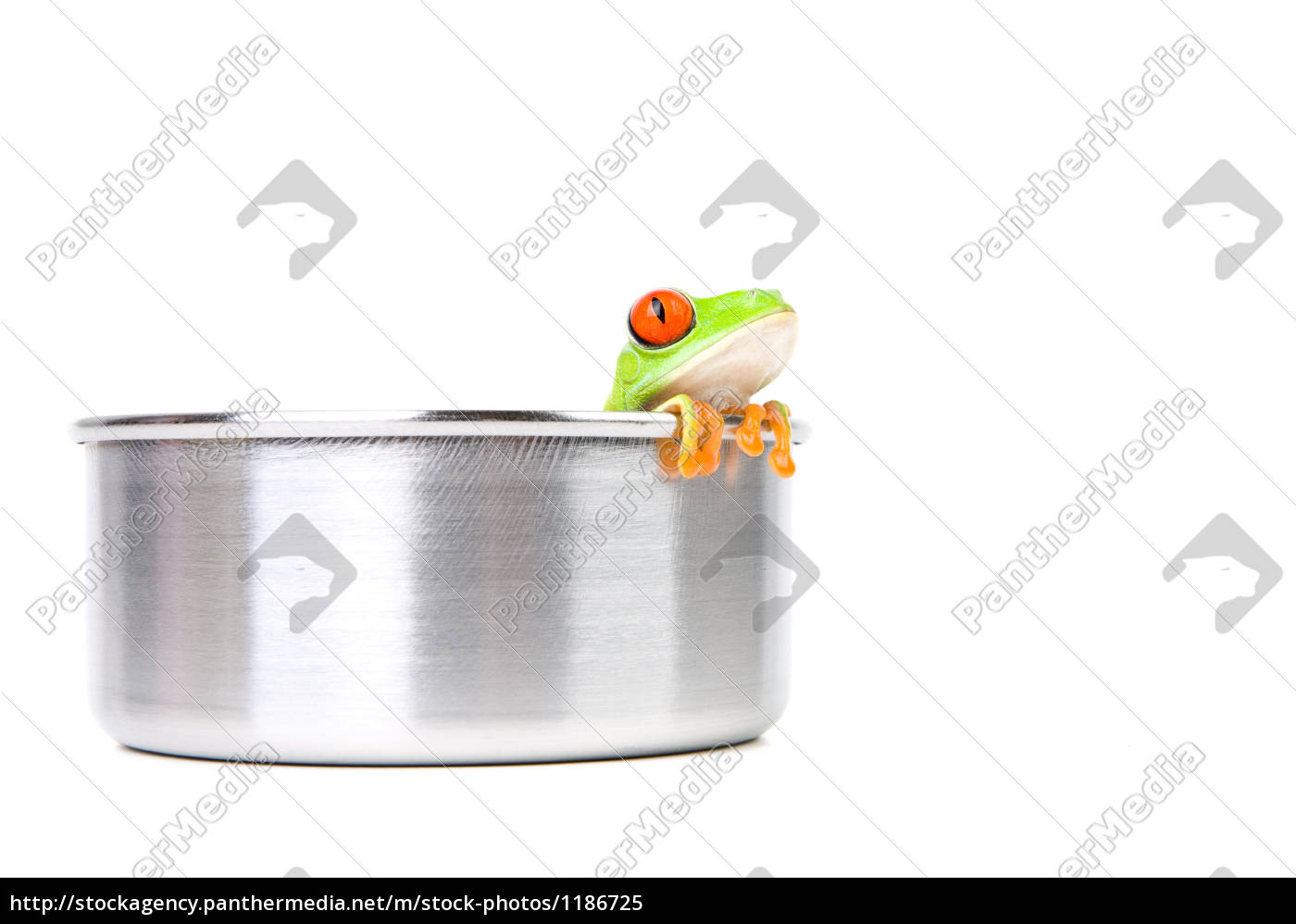 frog, on, cooking, pot - 1186725