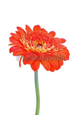 a little flower alone