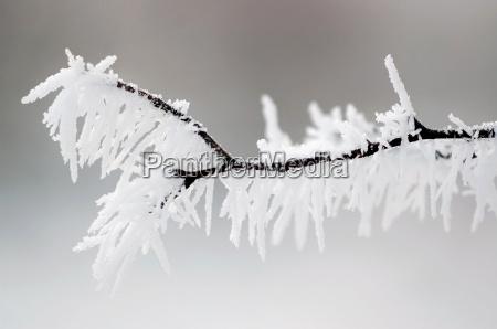 winter schnee blaett